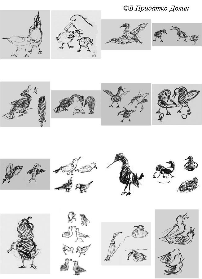 Seabirds, Wrangel Isl, 1988
